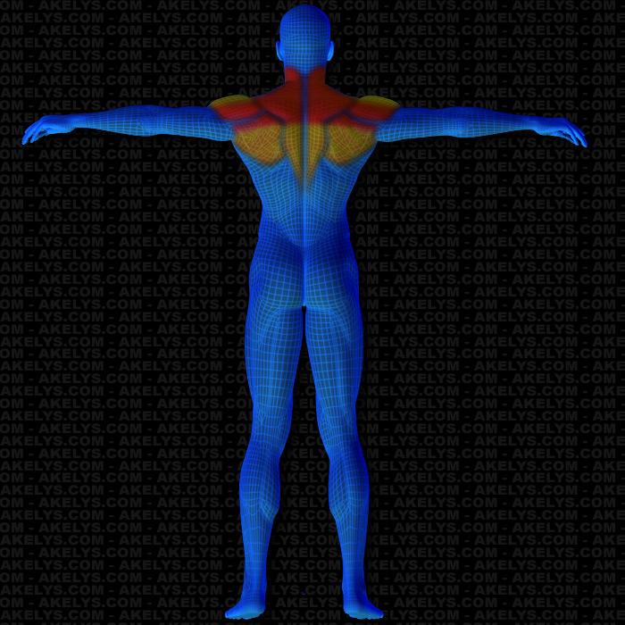 MUSCLE TRAINING bodybuilding muscle mag/FRANK ZANE/Bob Paris/Lydia Cheng 4-84